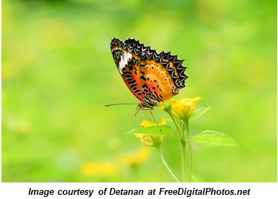 3 Tips for Putting the Butterfly Effect of Networking in Motion