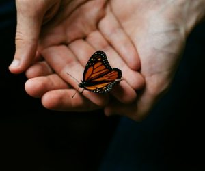 The Butterfly Effect of Networking